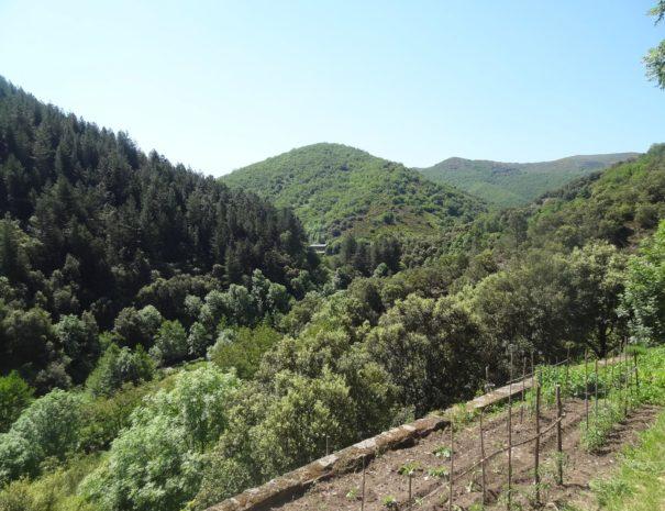 Propriété : Panorama depuis un bancèl (terrasse soutenue par un mur) du jardin potager